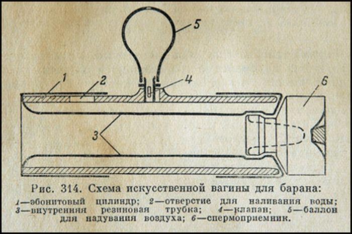 Рис. 314. Схема искусственной вагины для барана2—эбонитовый цилиндр